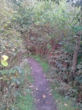 2. Sentier créé par la récurrence du passage des dragueurs, bois de Vincennes (Lassaube, 2013)