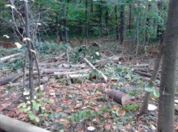 4. Déchets d'élagage massif dans une des zones de drague du bois de Vincennes (Lassaube, 2013)
