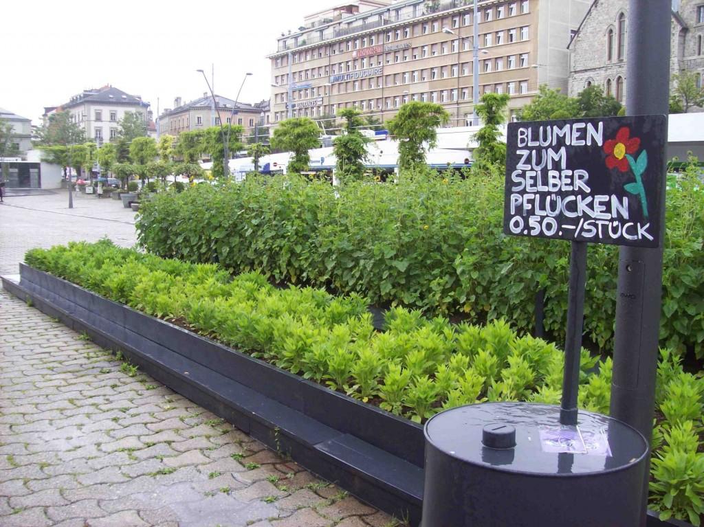Place de la Riponne, des rangées de plantations qui offrent leurs fleurs « en libre-service » (Francou, 8 juillet 2014).